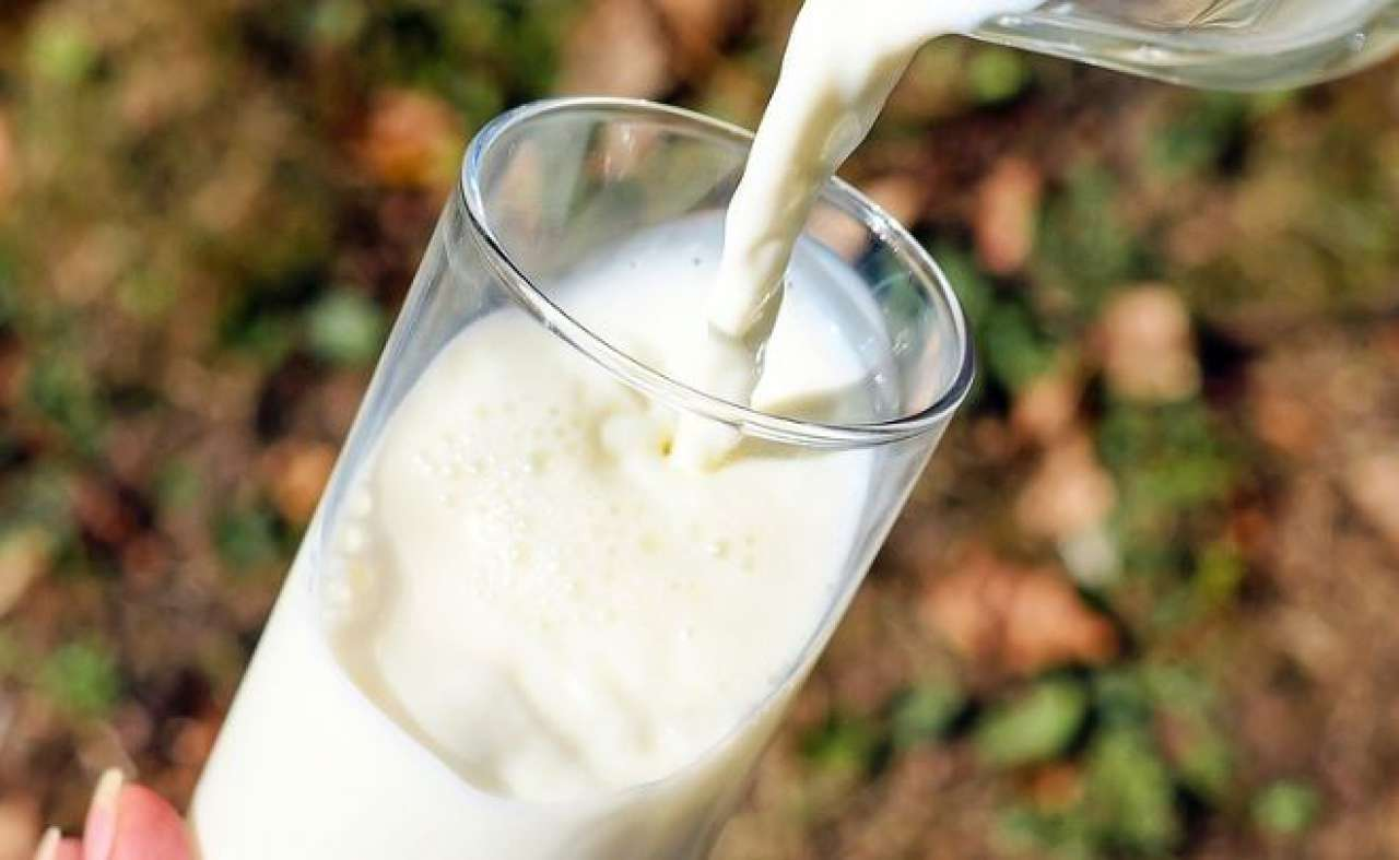 Keime In Milch